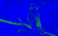 effect_color_blue