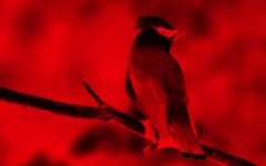 effect_color_red
