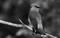 effect_grayscale