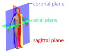 解剖学平面