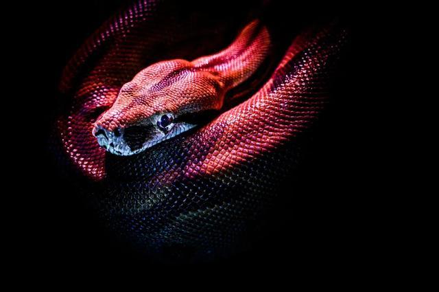 科普!人人都爱Python,可Python为什么叫Python?