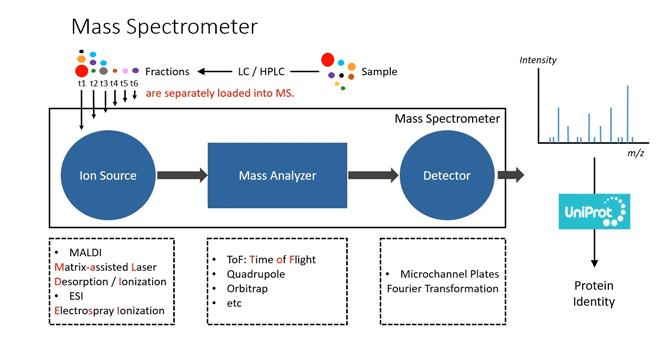 蛋白质组分析鉴定流程