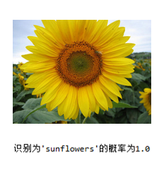 image-20200323231935143