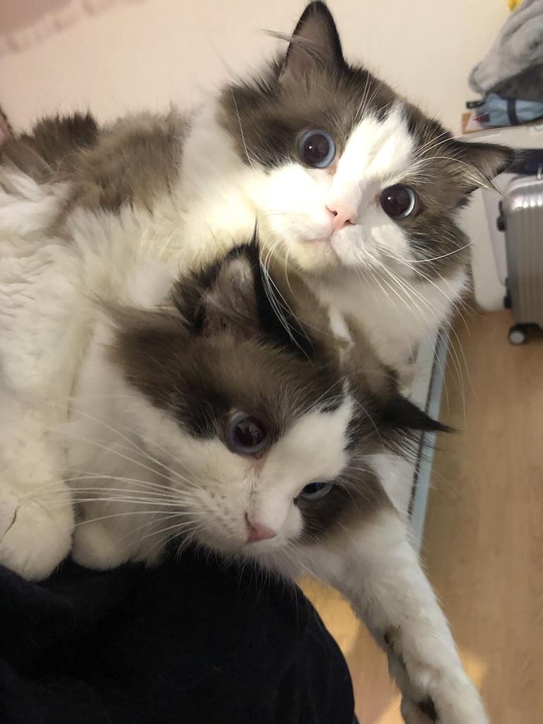 两兄弟总是基情满满